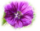 small_piante2
